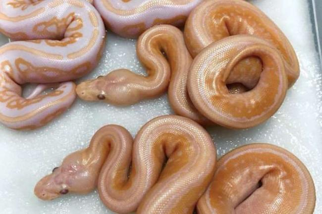 Snakes or doughnuts: People get confused to figure out