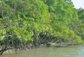 2 sea robbers held in Sundarbans